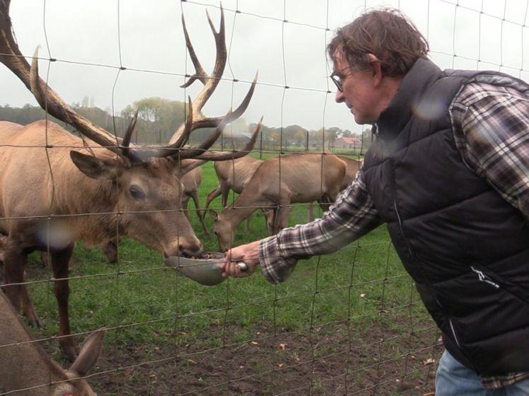 Boer verzamelt ruim 5000 kilo eikels voor zijn herten: 'Ze moeten stevig de winter in'