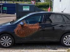 20.000 abeilles retrouvées sur la portière d'une voiture