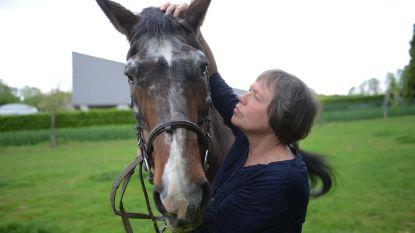 """Hengst Goya, 36 jaar oud en nooit hoefijzers nodig gehad: """"Wellicht het oudste paard van de streek"""""""