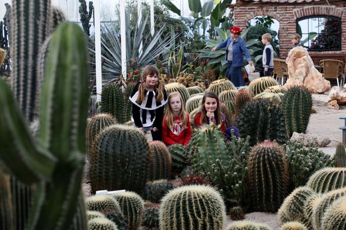 Een van de uittips voor ouders met kinderen tijdens de stakingsdag: CactusOase.