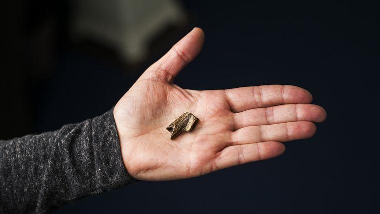 Het gevonden fossiel. Conservator Bram Langeveld ziet eigenlijk meteen wat het is. Beeld Jiri Buller