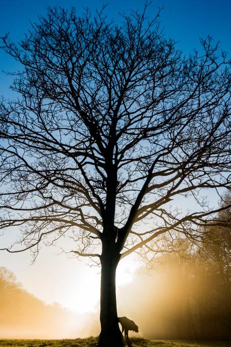 172 kiekjes van de boom van licht