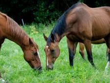 Rhino-virus treft paardenstal Oene