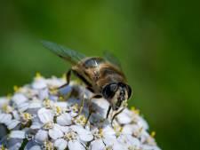 Drimmelen zet zich in voor leefomgeving van bijen