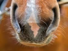 Vijfde paard Manege Lelystad bezweken aan rhinovirus