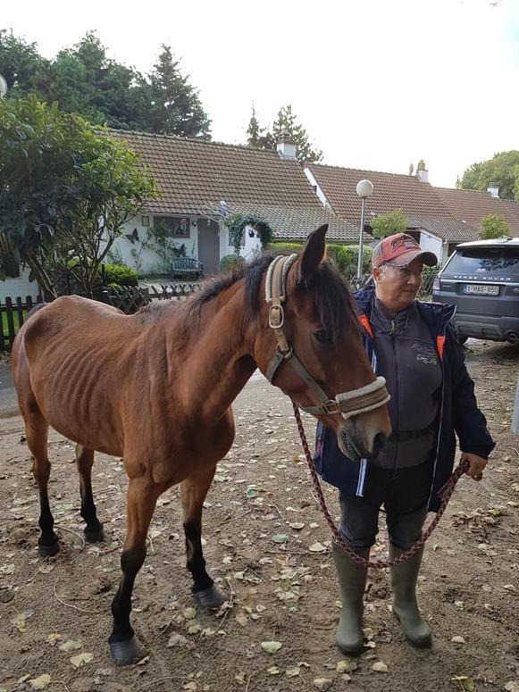 De tienjarige pony Black werd meer dan vier maanden na de verdwijning teruggevonden in het natuurreservaat, graatmager en vol teken maar in goede gezondheid.