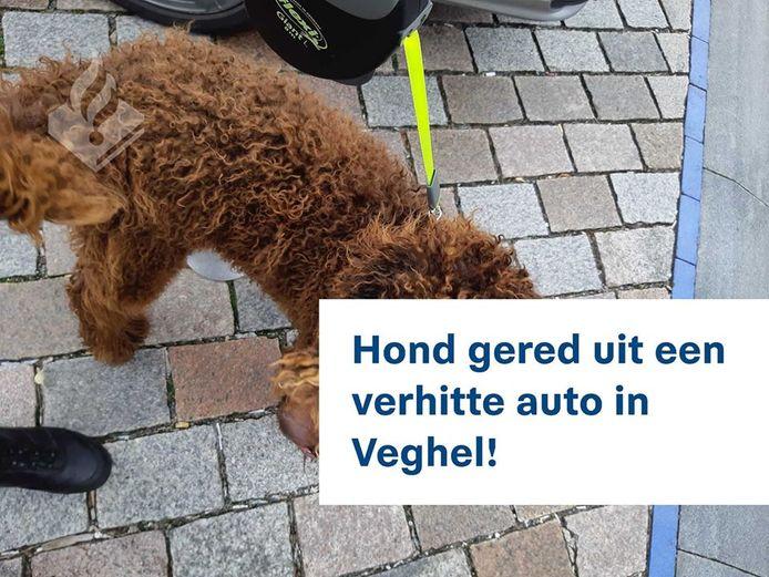 Hond uit te warme auto gered op de Markt in Veghel.