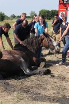 Brandweer redt paard uit de sloot in Schiedam