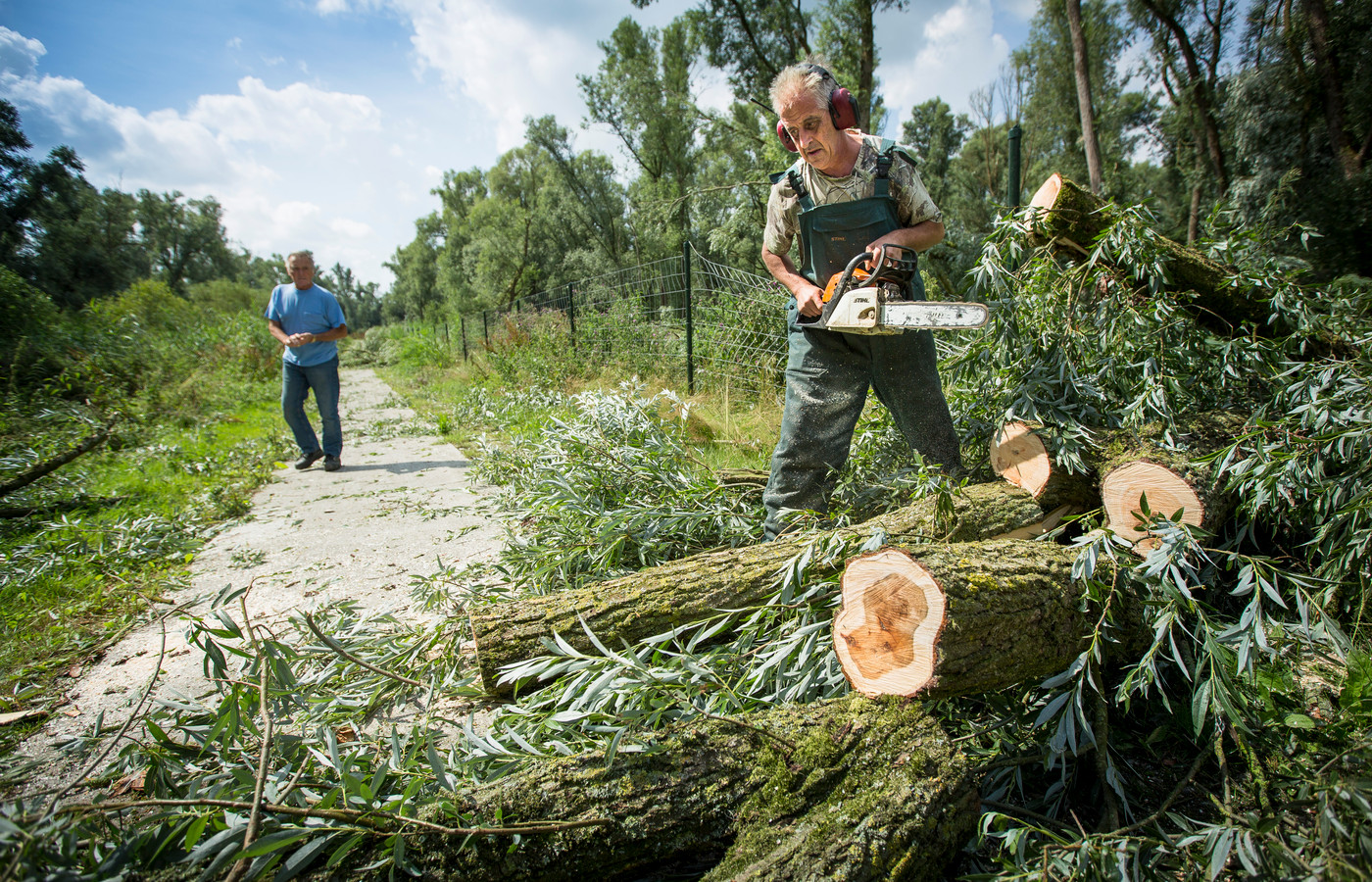 Archiefbeeld ter illustratie: vrijwilligers ruimen de ravage op die de zomerstorm heeft aangericht in de bossen rond de Oostvaardersplassen.