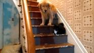 Hond staat doodsangsten uit om Chevy de kat te passeren
