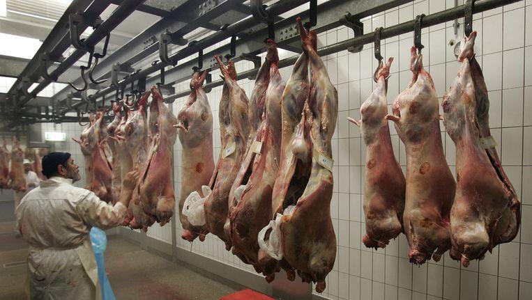Geslachte schapen. Beeld anp