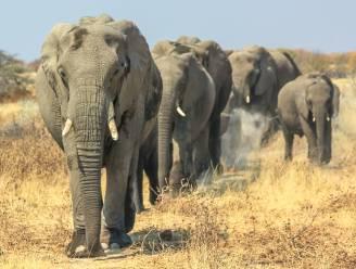Namibië zet 170 olifanten te koop