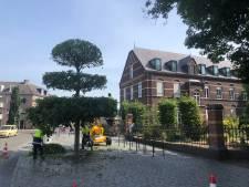 'Knipbeurt' voor geloofsboom OL Vrouw ter Linde in  Uden