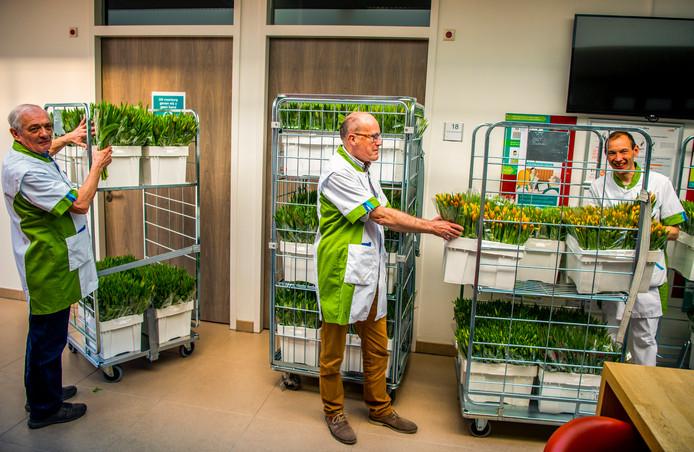 Het IJsselland Ziekenhuis in Capelle aan den IJssel kreeg vandaag 1500 bossen tulpen van ondernemers uit de regio, die andere ondernemers oproepen om hetzelfde te doen bij zorginstellingen. Foto: Frank de Roo