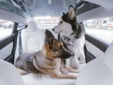 Badje in achterbak en puppyparaplu's: 7 slimme hondenhulpjes voor in de auto
