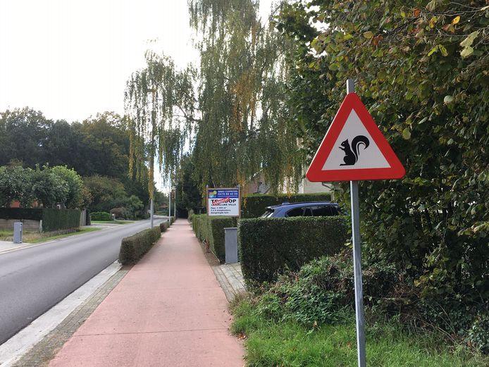 Verkeersbord voor eekhoorns in de Landstraat