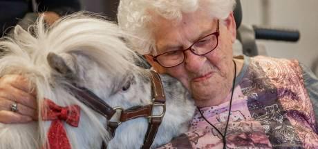Nynke (30) uit Steenwijk gaat met minipaardjes naar verzorgingshuizen: 'Mensen voelen zich beter'