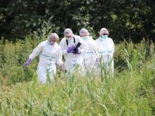 Dode gevonden in weiland bij Westdorpe; politie sluit misdrijf niet uit