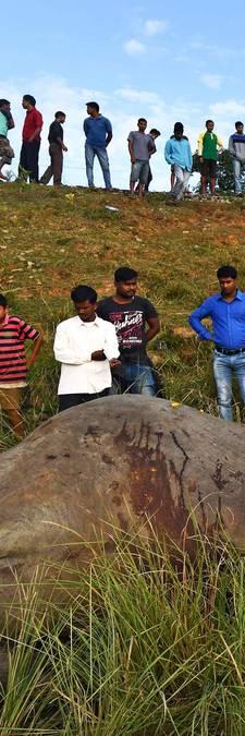 Twee olifanten doodgereden door trein in India