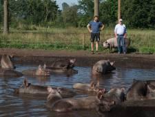 Dit is volgens Wakker Dier een van de mooiste modderpoelen van het land