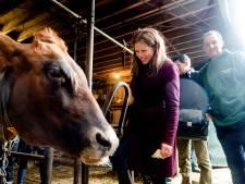 Politiek kan er niet meer omheen: minder varkens en koeien