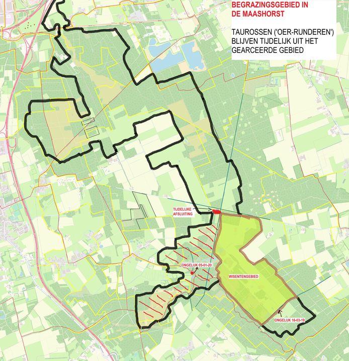 De taurossen zijn in januari na het ongeval weggehaald uit een 60 hectare groot deelgebied van de Maashorst. Dit deel ligt pal naast het wisentengebied.