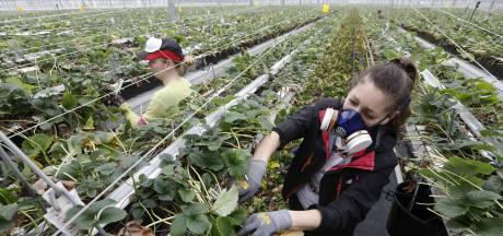 Voorlopig geen nieuwe cao voor glastuinbouw, onenigheid over flexarbeid