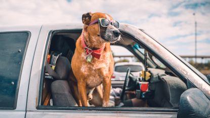 """Op reis en de hond mag mee? Dierenarts licht toe waar je moet op letten: """"Niet elk dier doe je daar een plezier mee"""""""