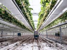 Nog geen koper voor IJsselmuider aardbeienkwekerij