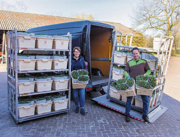 De lading tulpen voorafgaand aan transport naar de zorginstellingen.