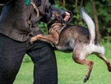 Hele wereld wil de Nederlandse politiehond, maar er is een keerzijde