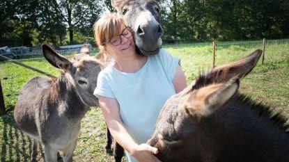 Wendy vangt verwaarloosde dieren op en zoekt nu steun