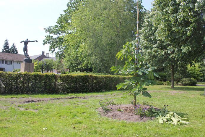 Afgebroken takken op de grond en een geknakte boomtop die aan de stam is vastgetaped om verdere schade te voorkomen.