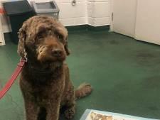 Dierenarts laat hond voor 150 euro braken om 180 euro uit zijn maag te krijgen