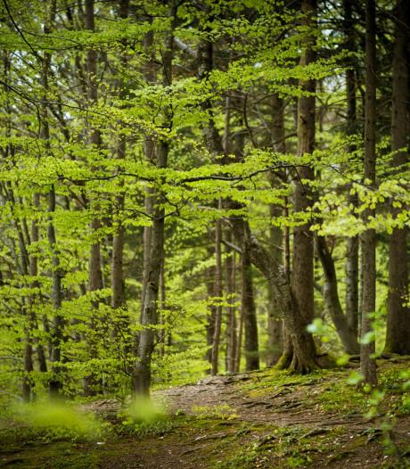 Overlast in bossen Bladel blijft irriteren