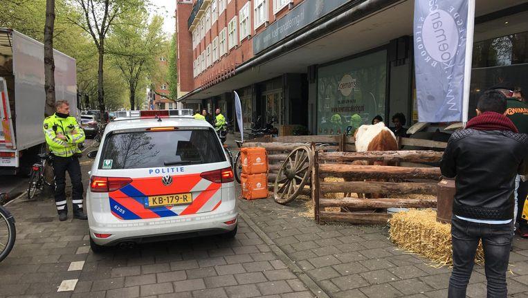 De politie arriveert bij de koe en haar kalf op de Amstelveenseweg. Beeld Jorien van der Keijl