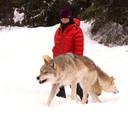 In Golden, Canada kreeg Marion de kans om wilde wolven te fotograferen.