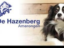 Oproep asiel: Kijk uit naar gedumpte hond in bos Amerongse Berg
