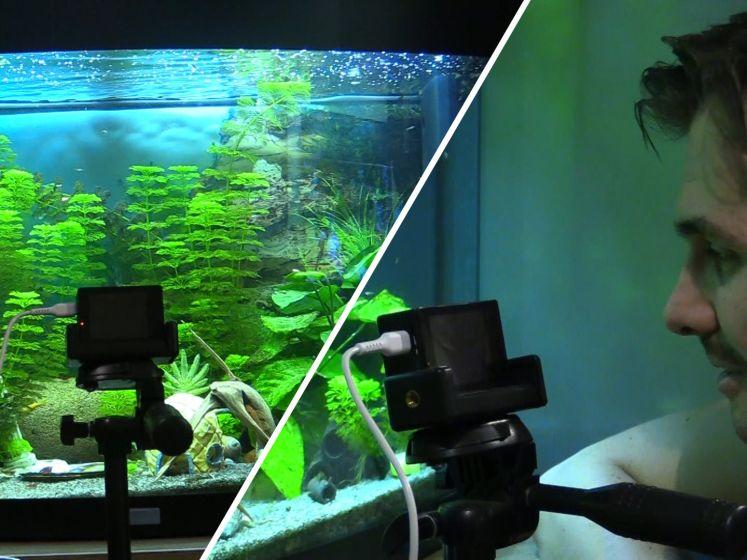 Thomas en Jeroen livestreamen hun aquarium: 'We hebben zelfs merchandise'