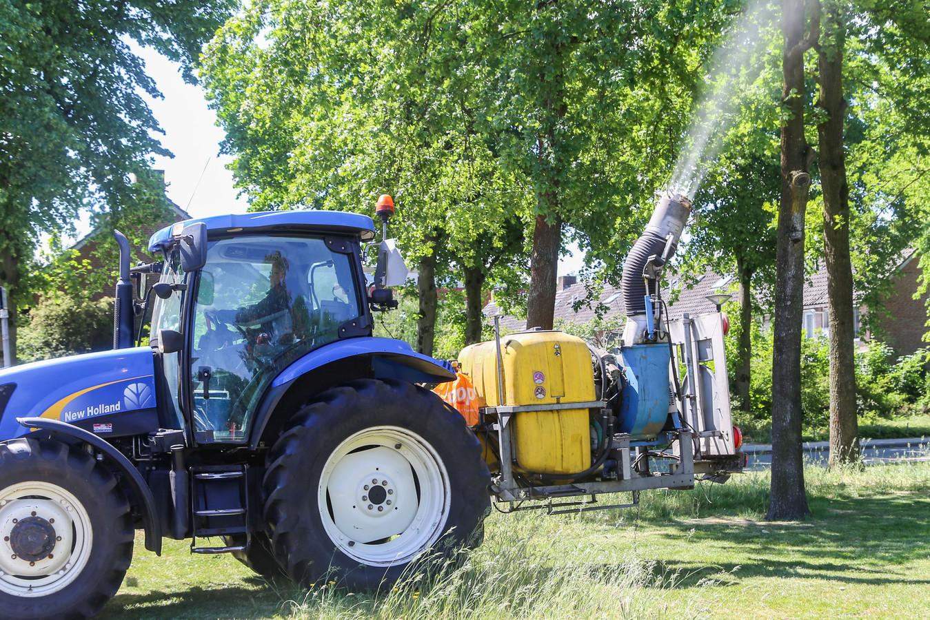De eikenprocessierups wordt in Wijchen onder meer bestreden door het spuiten van het gif Xentari (foto is niet in Wijchen gemaakt).