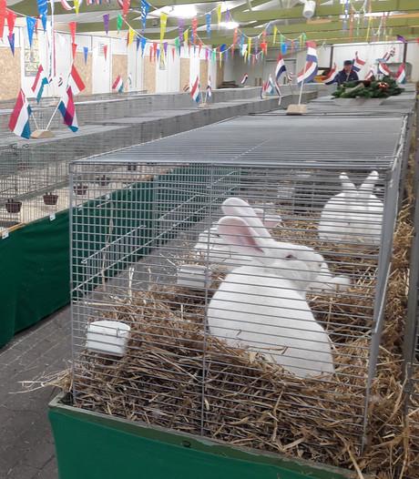 Kleindierenvereniging Meeuwen weer de pineut: pluimvee weg om vogelgriep