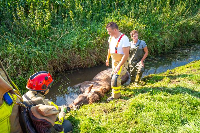 In Oldebroek werd zondag door de brandweer een paard uit het water gehaald.