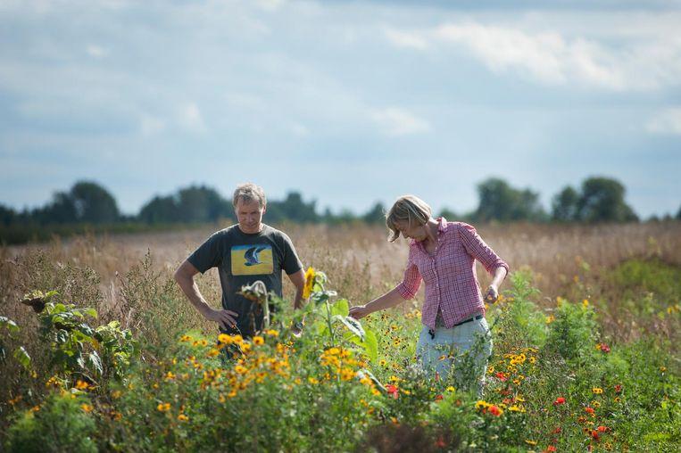 Boer Peter Harry Mulder en zijn vrouw Eline bij de bloemenstrook langs hun akker. Beeld An-Sofie Kesteleyn
