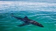 """Vriend ziet hoe man door haai wordt aangevallen: """"Geschreeuw, heel veel bloed en ineens zag ik een stuk van zijn surfplank voorbij drijven"""""""