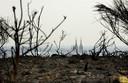 De gevolgen van een brand, jaren terug, op de Mookerhei.