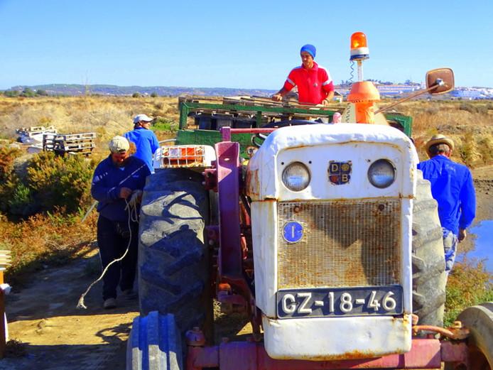 Deze mannen sjouwen ergens op het platteland in Portugal pallets naar de aanhanger van de tractor. Waarom is niet duidelijk, maar er werd hard gewerkt in de warme zon. Voor de toerist leverde de inspanningen een kleurrijke plaat op.