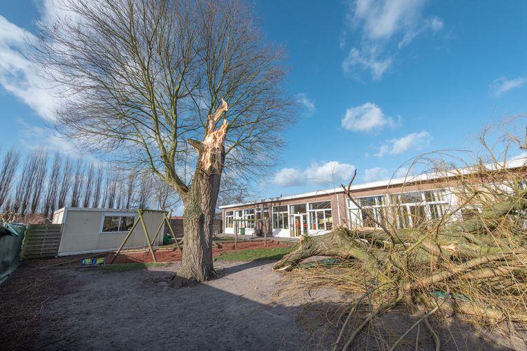 In kleuterschool De Parel in Niel kwam een grote wilg terecht op de speelplaats tijdens de storm Ciara.