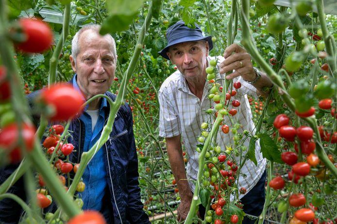 Adri Jonkers (r) en Toine van den Hurk in de kas van de biologische groentekwekerij in Spoordonk.