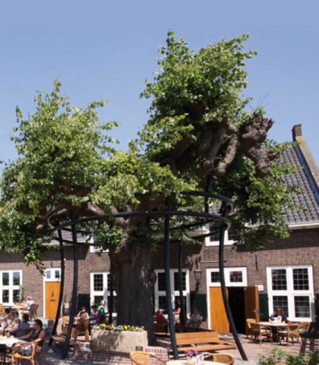 350 jaar oude linde bij Radstake is ziek en gaat naar de Apenheul
