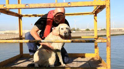 Hond valt van schip en wordt gered door brandweer